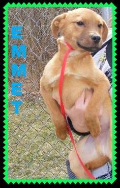 URGENT URGENT! SHELTER FULL! --EMMETT--Labrador Retriever • Young • Male • Medium. Lawrence County Dog Shelter Ironton, OH. Available for a limited time from the Lawrence County Dog Pound, 1302 Adams Lane Ironton, OH 45638. Please call the dog warden at 740-533-1736 for further details. Unfortunately the pound does not have long distance calling so please call back if we do not return your call. The pound is open Monday-Friday, 10-4, except holidays. Adoption fee is $30 for Dogs and puppies.