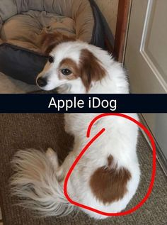 Funny Animal Pictures 33 Pics - Funny Animal Quotes - - Funny Animal Pictures 33 Pics The post Funny Animal Pictures 33 Pics appeared first on Gag Dad. Funny Animal Jokes, Funny Dog Memes, Funny Dog Videos, Crazy Funny Memes, Really Funny Memes, Cute Funny Animals, Funny Animal Pictures, Funny Quotes, Memes Humor