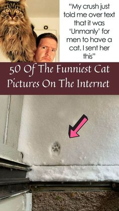 In true feline form, cats aren't in a hurry to jump onto our laps. #50 #FunniestCat #Pictures #Internet
