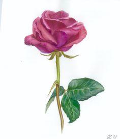Watercolor rose, botanical art. Watercolor Rose, Botanical Art, Art Pictures, My Arts, Roses, Birds, Heart, Plants, Etsy
