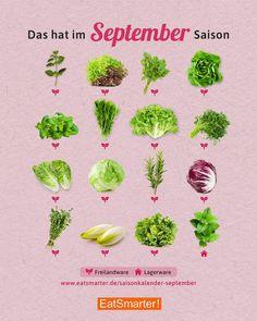 Seasonal calendar September: salad & herbs Saisonkalender September: Salat & Kräuter Season calendar September: what& in season now? Types Of Cereal, Plant Based Protein, Fruit In Season, Food Science, Nutrition Program, Eat Smart, Health Snacks, September, Eating Plans