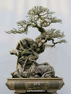Extraordinary Root-Over-Rock (Sekijoju) bonsai from Luutruongson Bonsai.work of a retired doctor in Hanoi, Vietnam Bonsai Pruning, Bonsai Ficus, Bonsai Soil, Bonsai Plants, Bonsai Garden, Bonsai Forest, Bonsai Styles, Tree Care, Ikebana