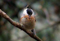 Seven ways to help the nesting birds in your backyard this spring.