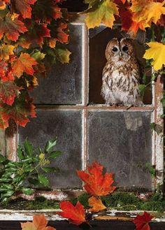 """Fall Owl"" From Brian Bevan Photography Fall Owl, Autumn Day, Autumn Leaves, Winter, Samhain, Mabon, Aluco, Autumn Scenes, Beautiful Birds"