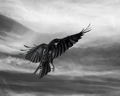 Tempest Crow Limited Edition Photography Bird Art by susieloucks, $100.00