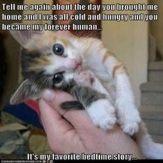 Cute Kittens For Free Cute Cats And Dogs Together Cute Kittens, Cats And Kittens, Kitty Cats, Kittens Meowing, Kittens Playing, Small Kittens, Tiny Kitten, Funny Cat Pictures, Animal Pictures