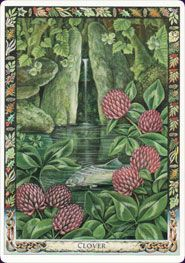 Clover ~ illustration by Will Worthington. From 'The Druid Plant Oracle'.