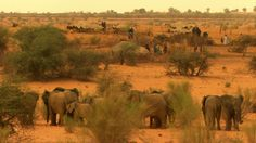 Mali elephants and locals living together