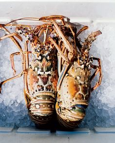 Try Bermuda Spiny Lobster. Season opens September 1. .  Pin provided by Elbow Beach Cycles http://www.elbowbeachcycles.com