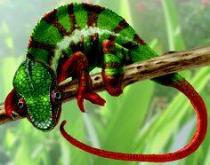 http://rjaymc.files.wordpress.com/2011/06/chameleon_cmyk1.jpg