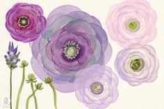 Watercolor purple ranunculus by GrafikBoutique on @creativemarket