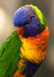 Colored beautiful bird