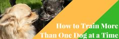 How to Train More Than One Dog at a Time - Dog Training Advice https://link.crwd.fr/1jKU