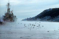 St. John's Newfoundland in Winter | The Narrows in Winter, St. John's, Newfoundland, Canada