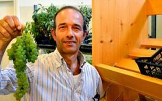 Mercato degli agricoltori, un trend da imitare #mercato #montevarchi #gal #reteimpresa