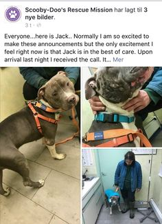 4/4/17 JACK FREDOM! WHY THE H... DIDN'T NYCACC TELL ABOUT THIS? THIS IS HORRIBLE! THE POOR DOG MUST BE IN TERRIBLE PAIN!! FOR A LOOOOONG TIME! POOR PRECIOUS JACK! I HOPE MAVERICK IS IN BETTER SHAPE! /ij🐾🐾  https://m.facebook.com/story.php?story_fbid=1382066995185921&id=1077925365600087&__tn__=%2As