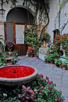 EL PATIO DE MI CASA, arte contemporáneo en 16 patios cordobeses    www.laguiago.com/cordoba/evento/22889/el-patio-de-mi-casa...     Interesting Patios