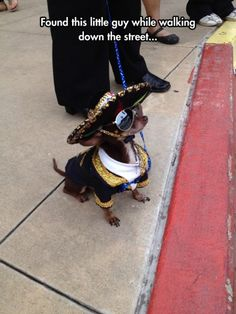 Speedy Gonzales, dog with sombrero, dog with sunglasses