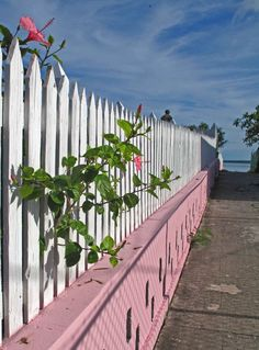 bahamas, abaco, green turtle cay, hibiscus, picket fence, cemetery