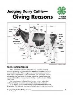 Image of Judging Dairy Cattle: Giving Reasons publication