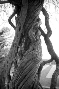Twisted Trees (Photograph: The Design Loft