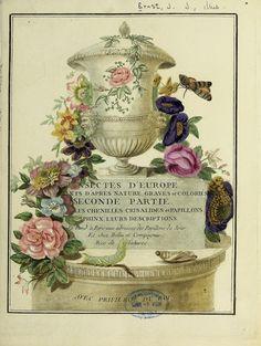 Papillons d'Europe, peints d'après nature /. A Paris :Chez P.M. Delaguette, imprimeur-libraire ... ;1779-1792 [i.e. 1793]. biodiversitylibrary.org/page/53453385