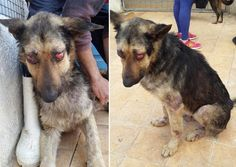 Dog poked in the eyes, dumped on the street for days! We want animal rights in Egypt! | YouSignAnimals.org