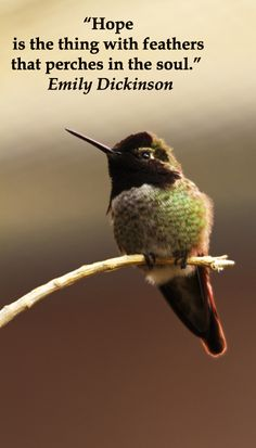 Hummingbird quote Inspirational quotes Hummingbird