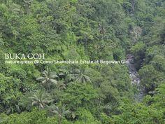 Beautiful nature green view from Como Shambhala Estate at Begawan Giri