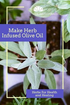olive oils Herb infused olive oil is not just for food! In this post, we look at how to make herb infused olive oil and the 12 best herbs for health and healing. Holistic Healing, Natural Healing, Oils For Relaxation, Olive Oil Benefits, Refined Oil, Herbs For Health, Infused Oils, Herbal Remedies, Natural Remedies