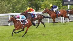 Want to see your horse finishing at the top position of the race? Want to make money from betting? It is possible through effective #BettingTips. Get highly effective betting tips with 100% assurance from online and start winning your betting.