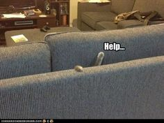 Has someone seen the cat?