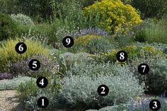 ...1:Sideritis cypria 2: Senecio vira-vira 3: Salvia chamaedryoides 4: Euphorbia rigida 5: Salvia lavandulifolia subsp. vellerea 6: Anthyllis cytisdoides 7:Phlomis purpurea subsp. almeriensis 8:Euphorbia characias subsp. wulfenii 9:asphodelus fistulosus...
