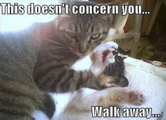 If you are looking for Cat Memes.Today we collect some Cat Memes evil that are so humor and hilarious.Read This Top 29 Cat Memes Evil Top 29 Cat Memes Evil Top 29 Cat Me… Funny Animal Images, Funny Animal Pictures, Funny Images, Funny Animals, Cute Animals, Funny Pics, Bing Images, Animals Images, Funniest Animals