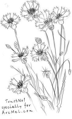 How to draw a cornflower step 4
