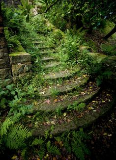 Enchanted steps / Pigeon Tower at Rivington, Lancashire - UK