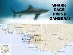 Experience shark cage diving in Gansbaai Shark Pics, Shark Pictures, The Great White, Great White Shark, Shark Cage, Shark Conservation, Shark Diving, Afrikaans, My World