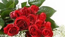 Bouquet of a Dozen Roses Beautiful Red Roses, Amazing Flowers, Unique Flowers, Beautiful Images, Red Rose Pictures, Bunch Of Red Roses, Rose Flower Wallpaper, Wholesale Roses, Buy Wholesale