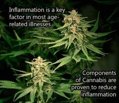 Do you use cannabis to reduce #inflammation? How is it working out for you?  #LosAngeles #PotValet #California #MedicalMarijuana