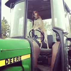 Coonhound driving a John Deere Country Farm, Country Life, Country Girls, Country Living, Country Bumpkin, Country Style, Country Roads, Thalia, Old Tractors