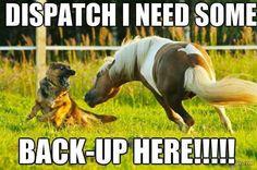Quit horsing around #germanshepherd