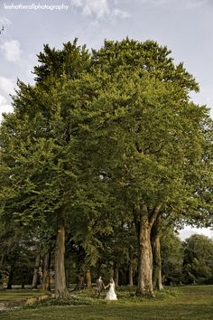 Trees at Coombe Lodge