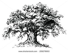 stock-vector-vector-old-tree-isolated-black-silhouette-on-white-background-209278693.jpg (450×355)