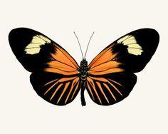 Longwing Butterfly Photo - fine art print by Allison Trentelman – Rocky Top Studio