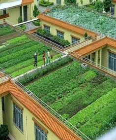 Home Gradens at home roof top wow very Beautiful