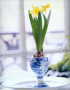 yellow daffodils couldn't be prettier with blue  white prints especially for springtime.Can't grow daffodils in your zone...chill in refrig. just google for instructions