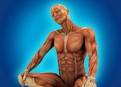 """The """"Hidden Survival Muscle"""" In Your Body Missed By Modern Physicians That Keep Millions Of Men And Women Defeated By Pain, Frustrated With Belly Fat, And Struggling To Feel Energized Every Day… Posture Fix, Strength Program, Muscles In Your Body, Muscle Body, Knee Pain, Easy Workouts, Back Pain, How To Relieve Stress, Body Weight"""