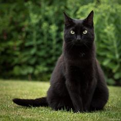 Such an obliging moggy by Helen Hooker - PhotoBlog