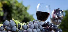 VIN A PLUS DE 15$......Les meilleurs vins rouges | Vin Québec .... Classés par notes et par prix
