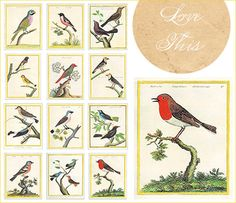 birds :: drawings